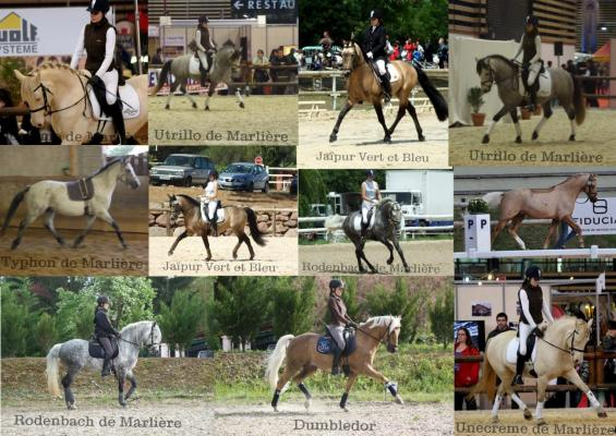 photo-poney-dressage-pour-le-site.jpg